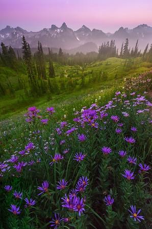 Deep Purples Under Twilight Pinks - Dead Horse Creek Trail, Mount Rainier National Park, WA