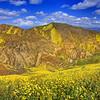 California Wildflowers_89