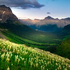 Beargrass Meadows Filling Hillsides - Going To The Sun Road, Glacier National Park, Montana