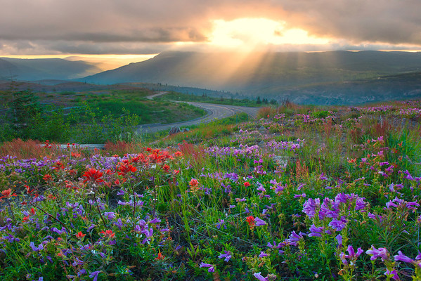 A Sign Of The Way To Go - Mount St Helens Volcanic Monument,  Washington State