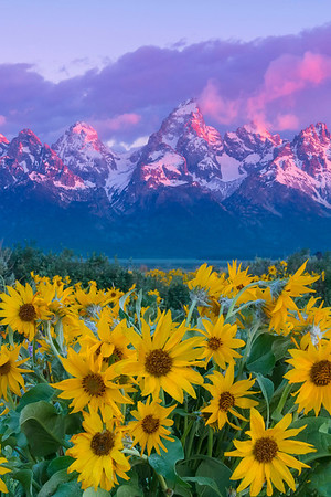 A Welcome Of All Kinds Of Color - Grand Teton National Park, Wyoming St