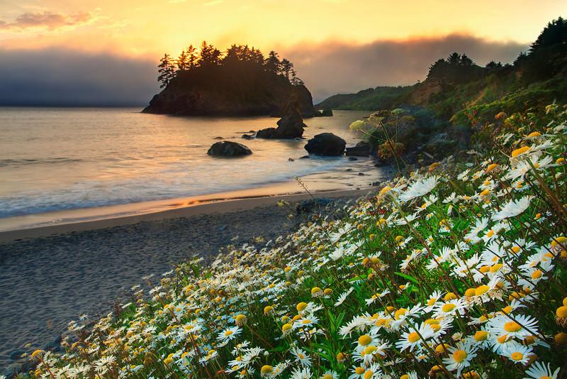 Spring Is Alive On The Coast - Trinidad Beach, Northern California