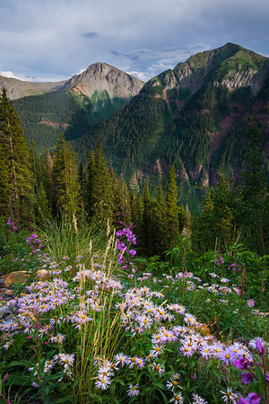 Flowers Roadside - San Juan Mountains, Colorado