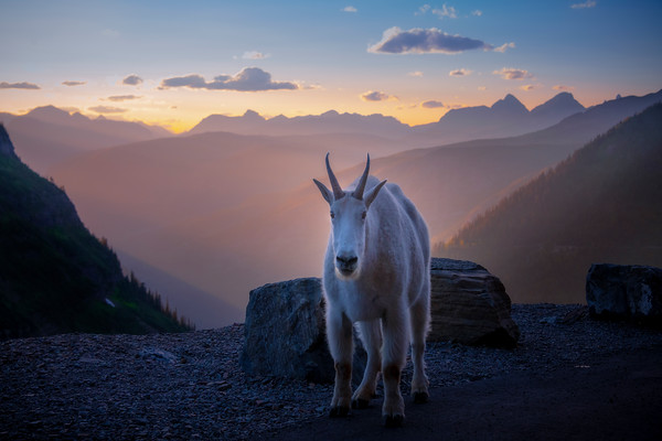 Visitors Joining Us For Sunset In The Valley -  Going To The Sun Road, Glacier National Park, Montana