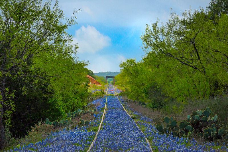 Railroad Tracks Full Of Blue Bonnets