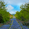Railroad Tracks Full Of Blue Bonnets
