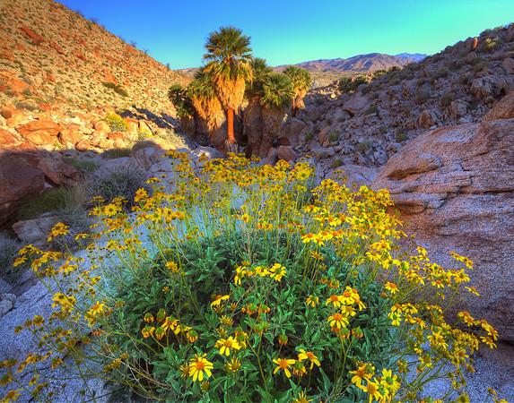 California Wildflowers_37