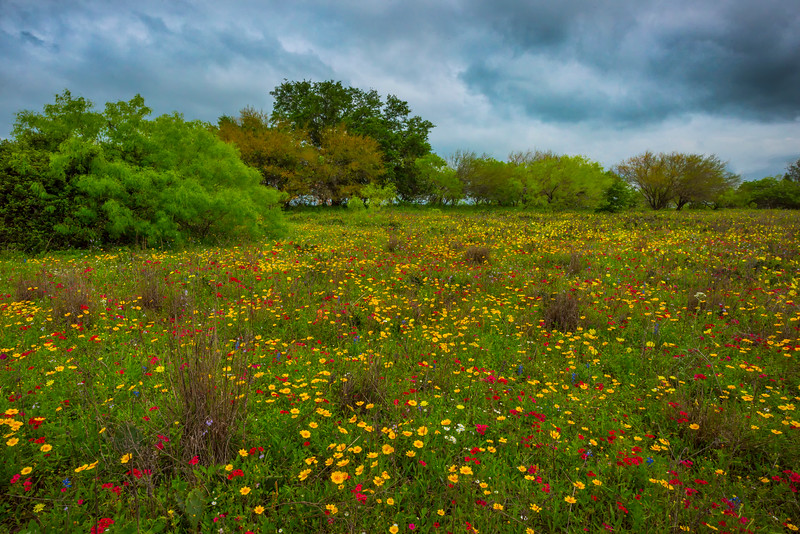 Fields Of Color And Life
