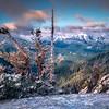 Frozen Creatures Framing The Olympics - Hurricane Ridge, Olympic National Park, WA