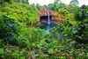 Akaka Falls State Park - The Big Island, Hawaii