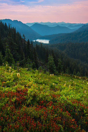 A Glory Of Red Hillside - Naches Peak,  Mount Rainier National Park, Washington St.