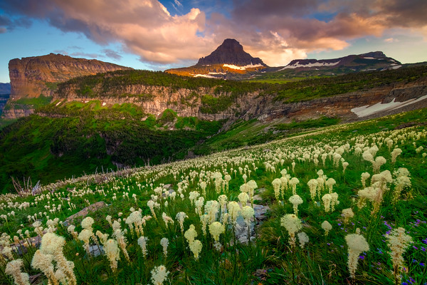 Beargrass Galore Below The Peaks - Going To The Sun Road, Glacier National Park, Montana
