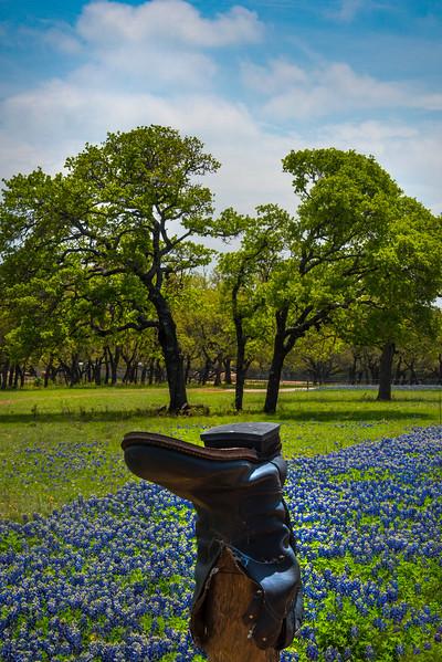 Cowboy Boot Blue Bonnet Field