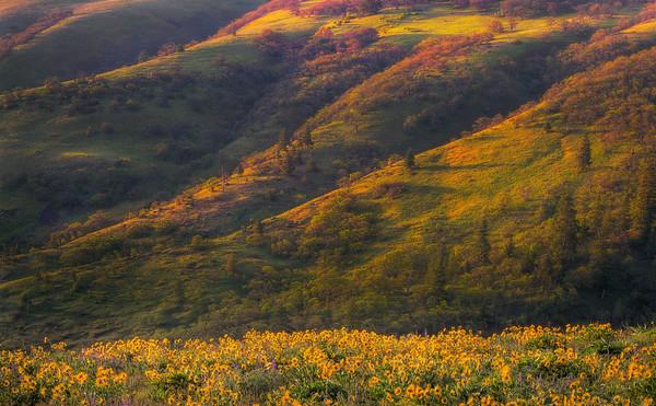 Warm Light Baths The Hills Of The Gorge - Rowena Crest Plateau, Columbia Gorge Scenic Area, Oregon