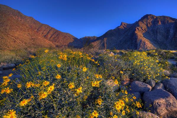 California Wildflowers_18