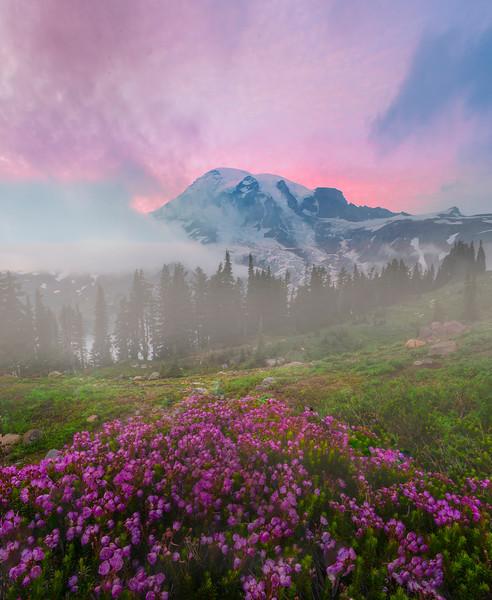 Pink Heather Sunset_Mount Rainier National Park_Washington