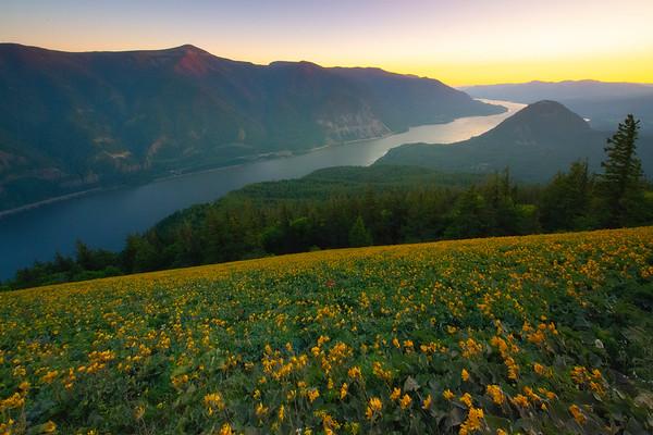 Owner - Dog Mountain Trail, Columbia Gorge, Washington