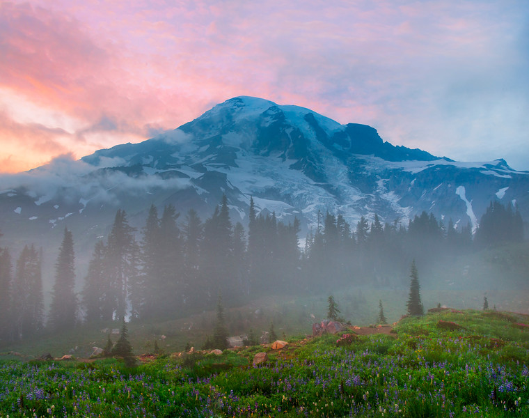 Sunset Pink Glow With Lupine_Mount Rainier National Park_Washington