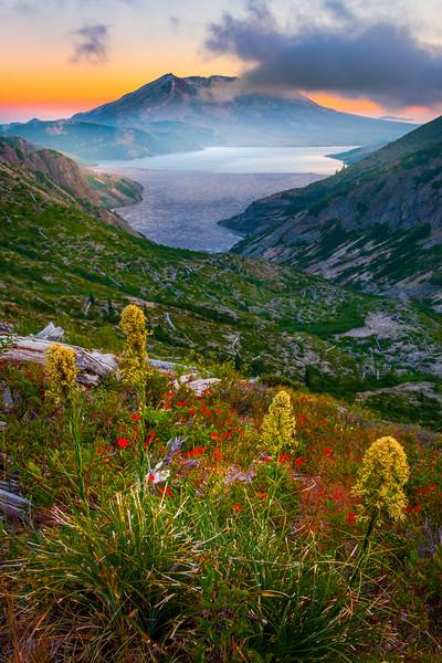 Beargrass On The Ridge Of Norway Pass