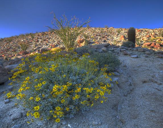 California Wildflowers_35