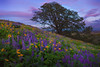 Springtime Color In The Hills - The Dalles, Washington
