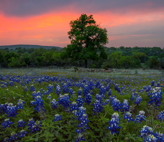 Willow City Loop Sunset With Bluebonnets