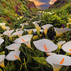 Cala Lily Sunset - Garrapata State Park, Big Sur Coastline, California