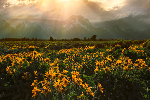 Sun Rays Coming Down From The Sky - Grand Teton National Park, Wyoming St