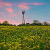 Wind Mill At Sunset in Yellow Field