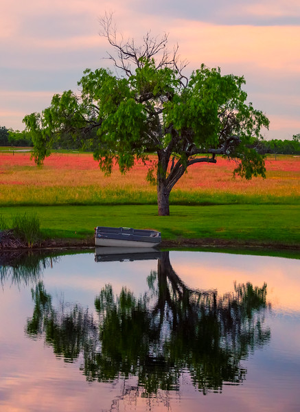 The Solo Tree Reflections At Sunset