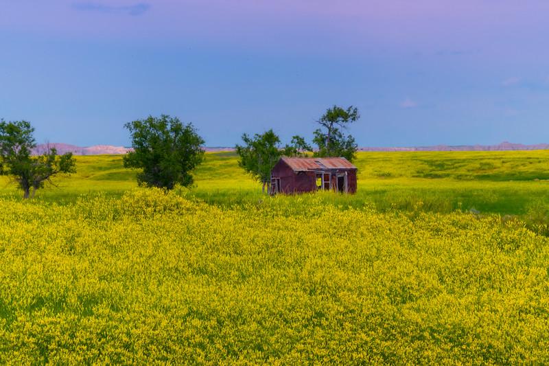 Immersed In Sweet Clover - Badlands National Park, South Dakota