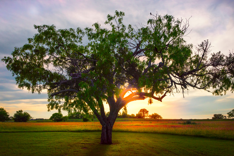 The Solo Tree And End Of Day