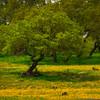 A Hidden Meadow Of Yellow