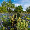 Prickly Bear Blue Bonnets_Vertical