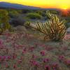 California Wildflowers_84