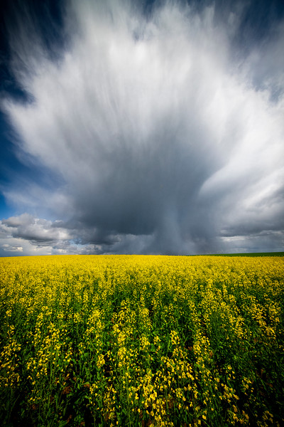 Funnel Build Up Of Clouds Over Canola Wallowa County, Oregon