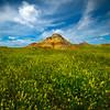 Acres  Of Yellow Fields - Makoshika State Park, Glendive, Eastern Montana