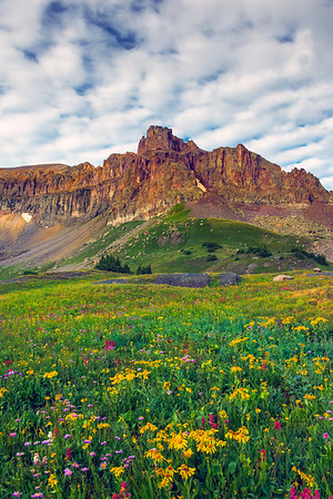 Every Flower Imaginable - Governor Basin, Colorado