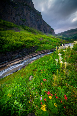 Wildflowers Alongside Creek - Siyah Creek,  Going To The Sun Road, Glacier National Park, Montana