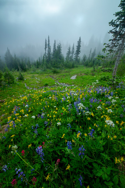 Wildflowers Leading Into The Fog - Mount Rainier National Park, WA