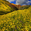 Valleys Of Yellow - Carrizo Plain National Monument, California