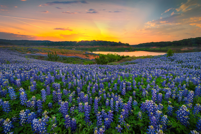 Streaming Blue Bonnets Down To The Colorado River