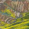 California Wildflowers_88