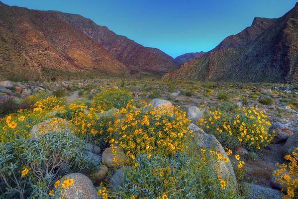 California Wildflowers_111