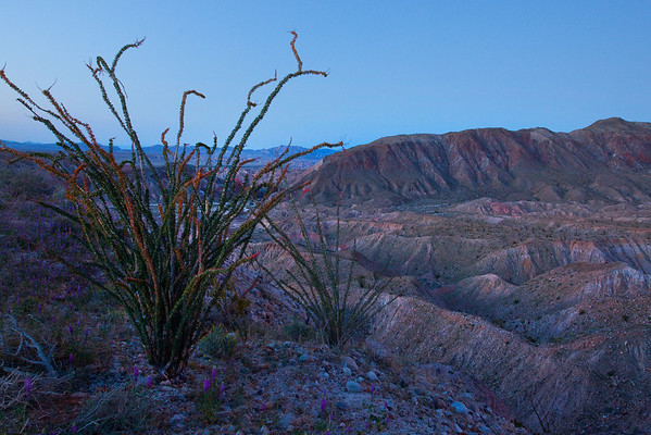 California Wildflowers_15