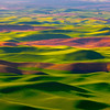Spring vibrant greens of the Palouse in Eastern Washington