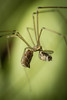 Along Cam A Spider