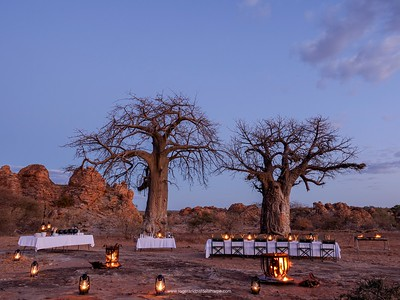 Dinner at the twin baobabs at Tuli Safari Lodge in the Northern Tuli Game Reserve. Botswana.
