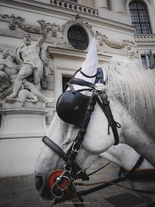 Horse portrait and statue on the side of The Hofberg Library. Vienna. Austria.