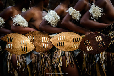 Zulu dancers with ceremonial shields. KwaZulu Natal. South Africa
